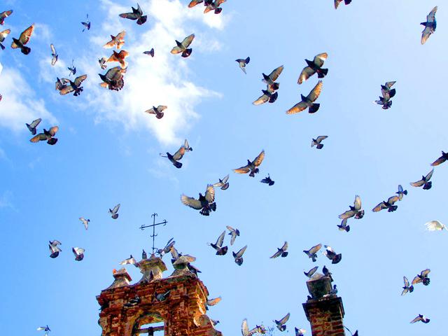 protección anti palomas